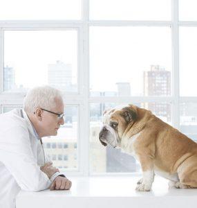 Krankheiten bei Haustieren vorbeugen